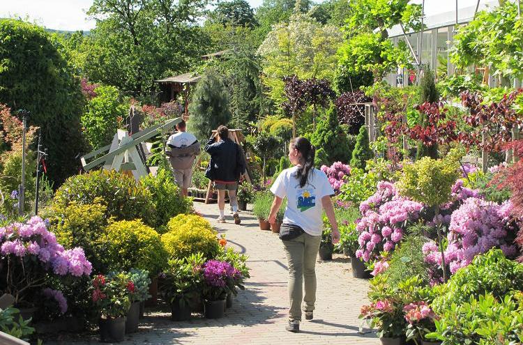 Kertészetünk - Budai Kertcentrum